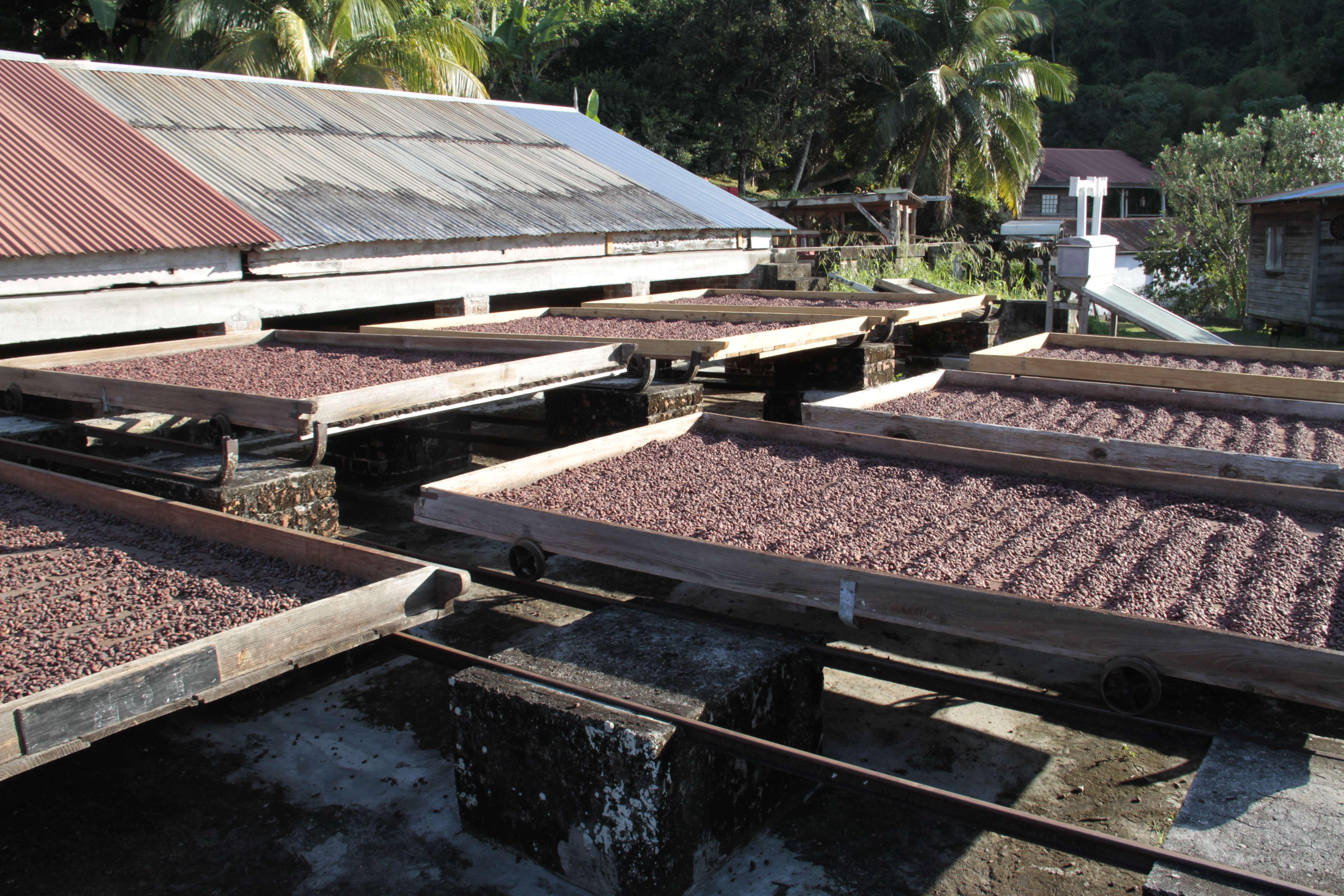 Grenade_0010 cacao qui seche