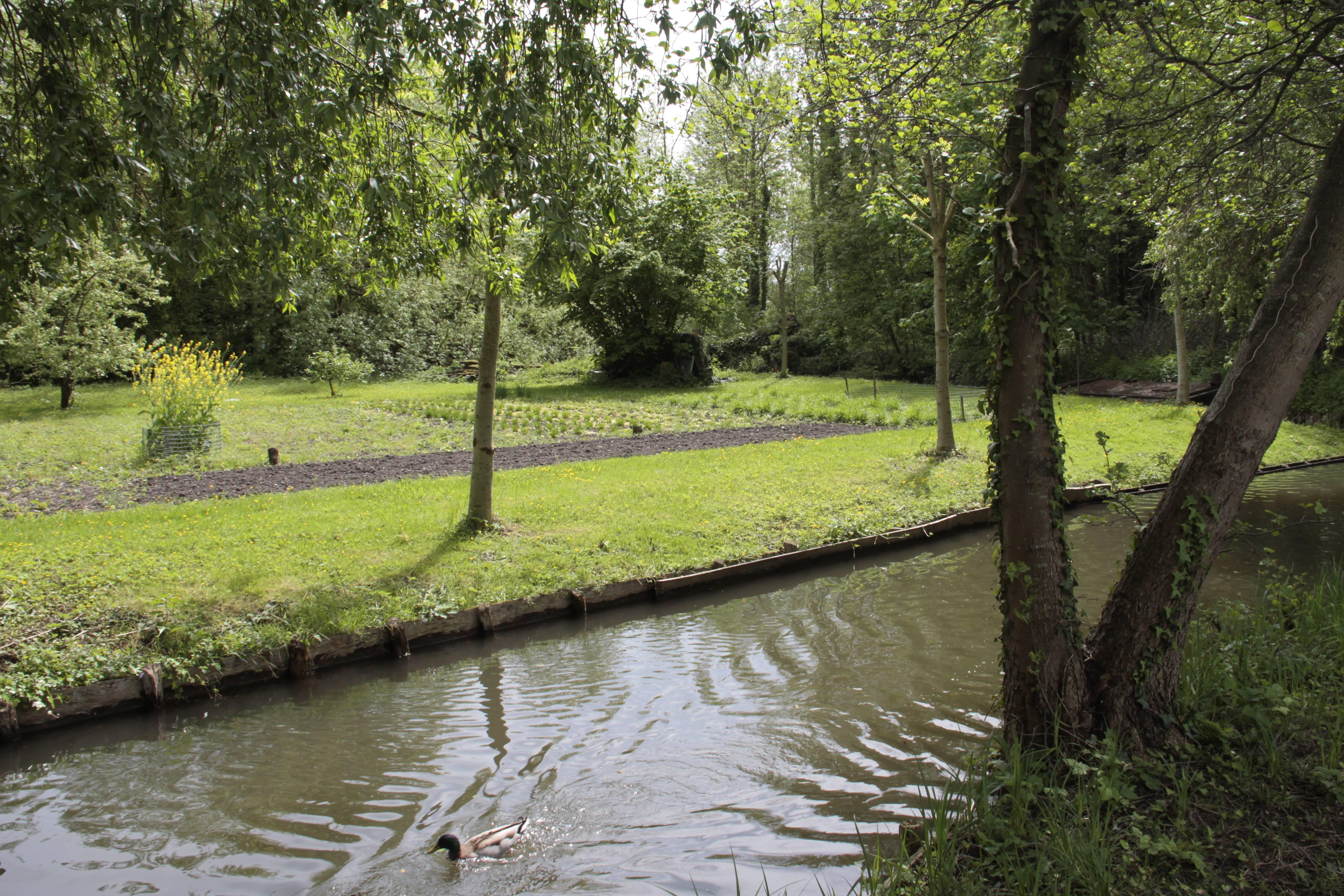Baie de Somme mai 2015_0056 Amiens parc St Pierre et hortillonages