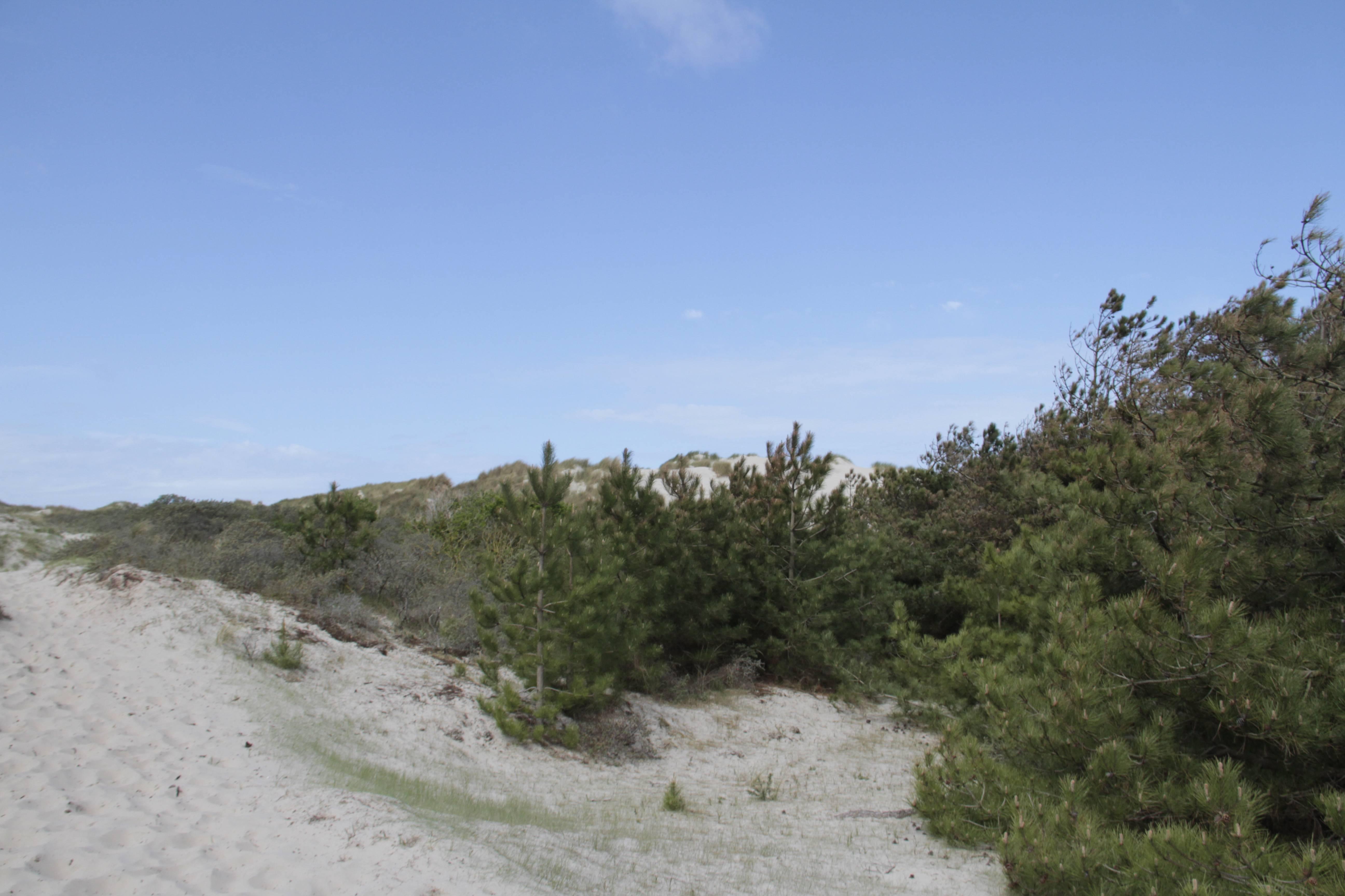 Baie de Somme mai 2015_0093 Tour du Marquenterre