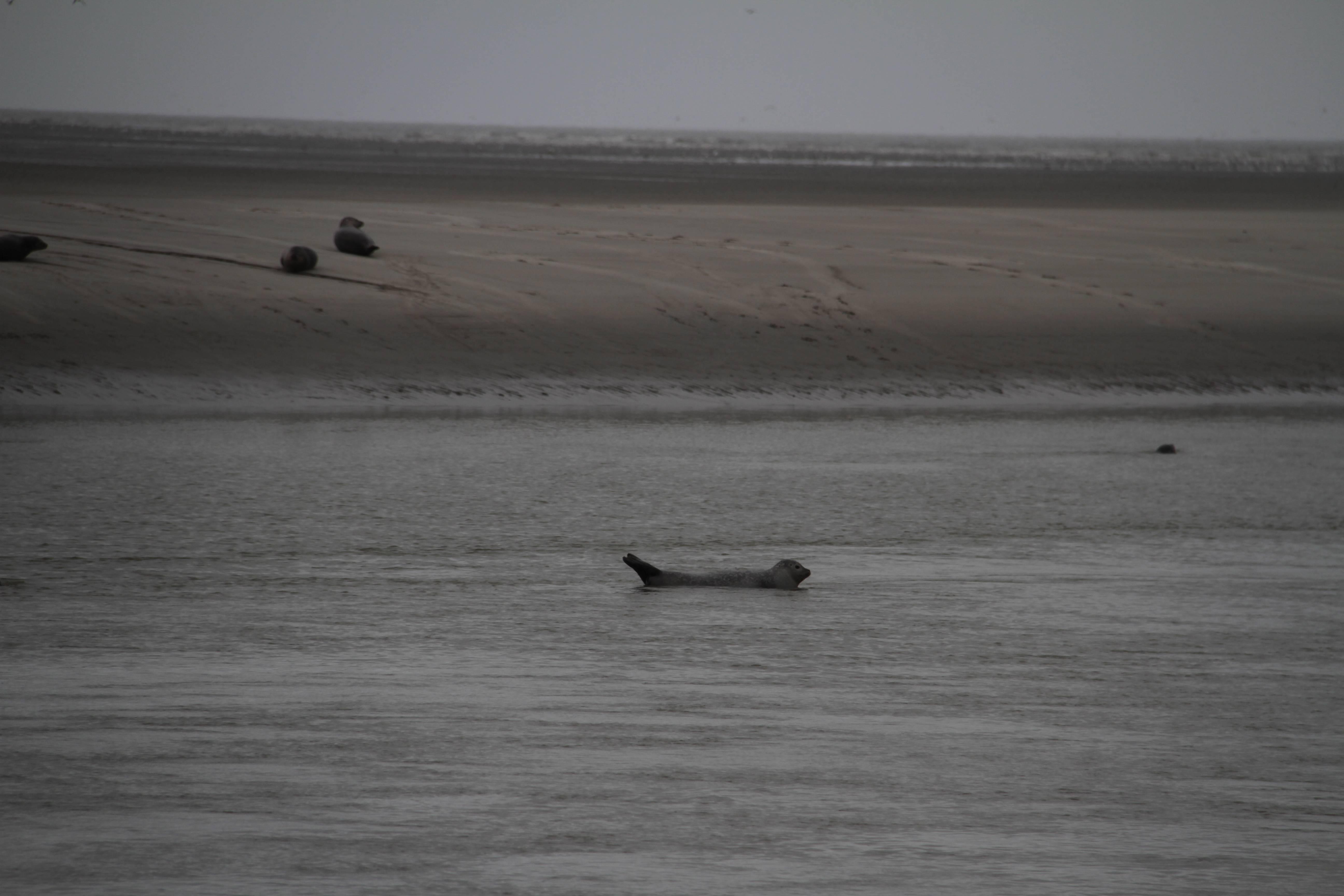 Baie de Somme mai 2015_0127 Berck sur mer