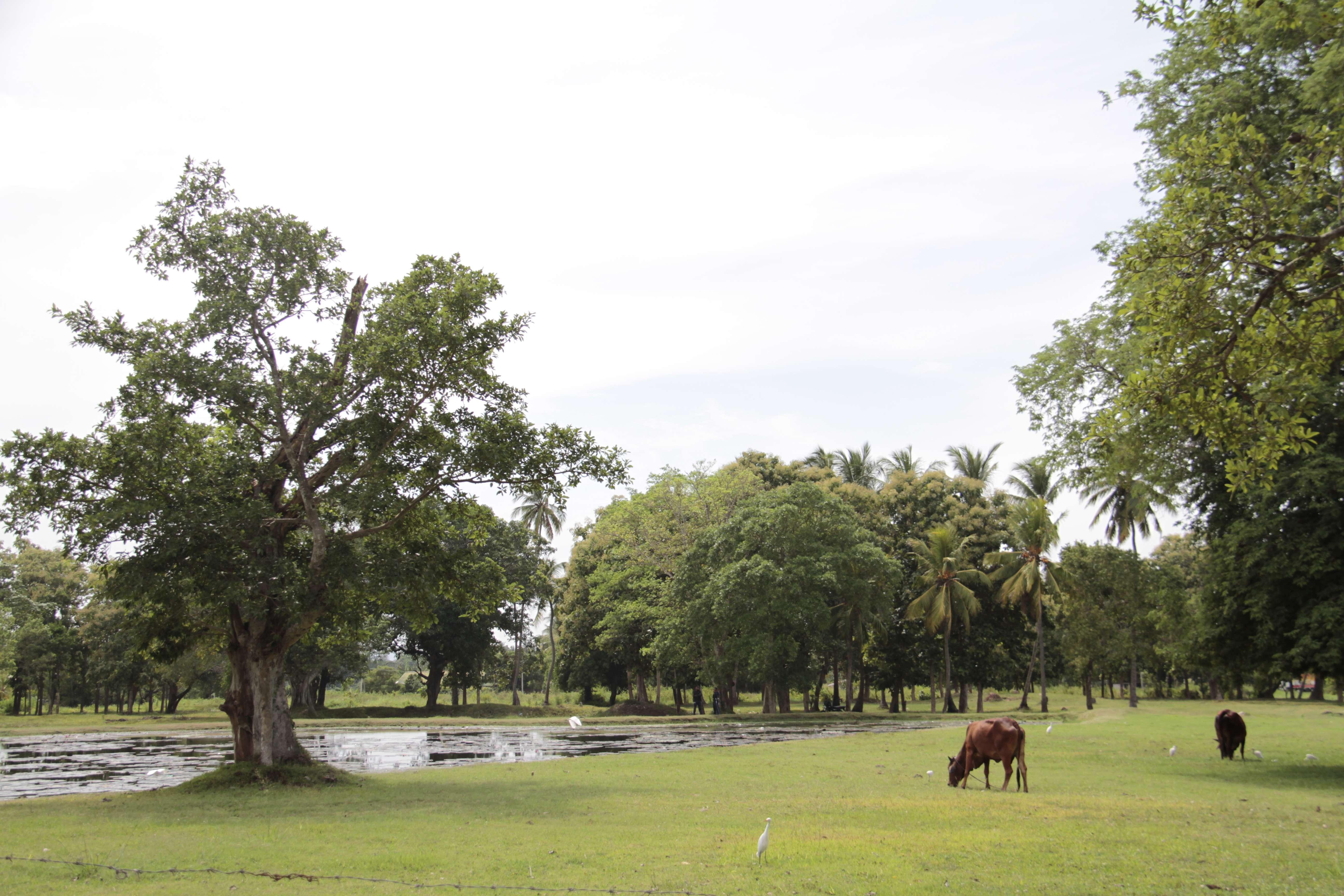 Sri Lanka aout 2017_0312 Anuradhapura