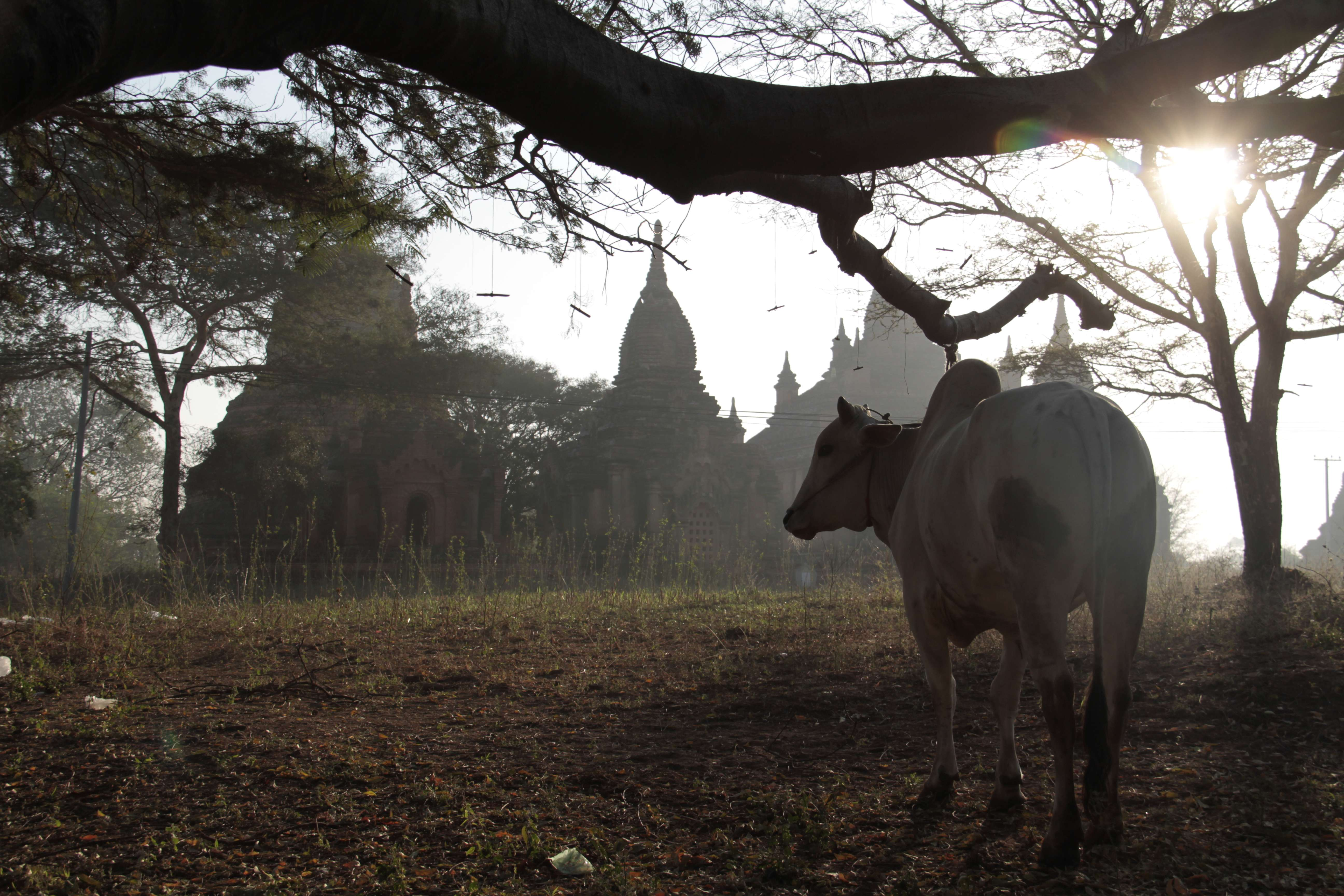 Myanmar fevrier 2019_0264 Bagan