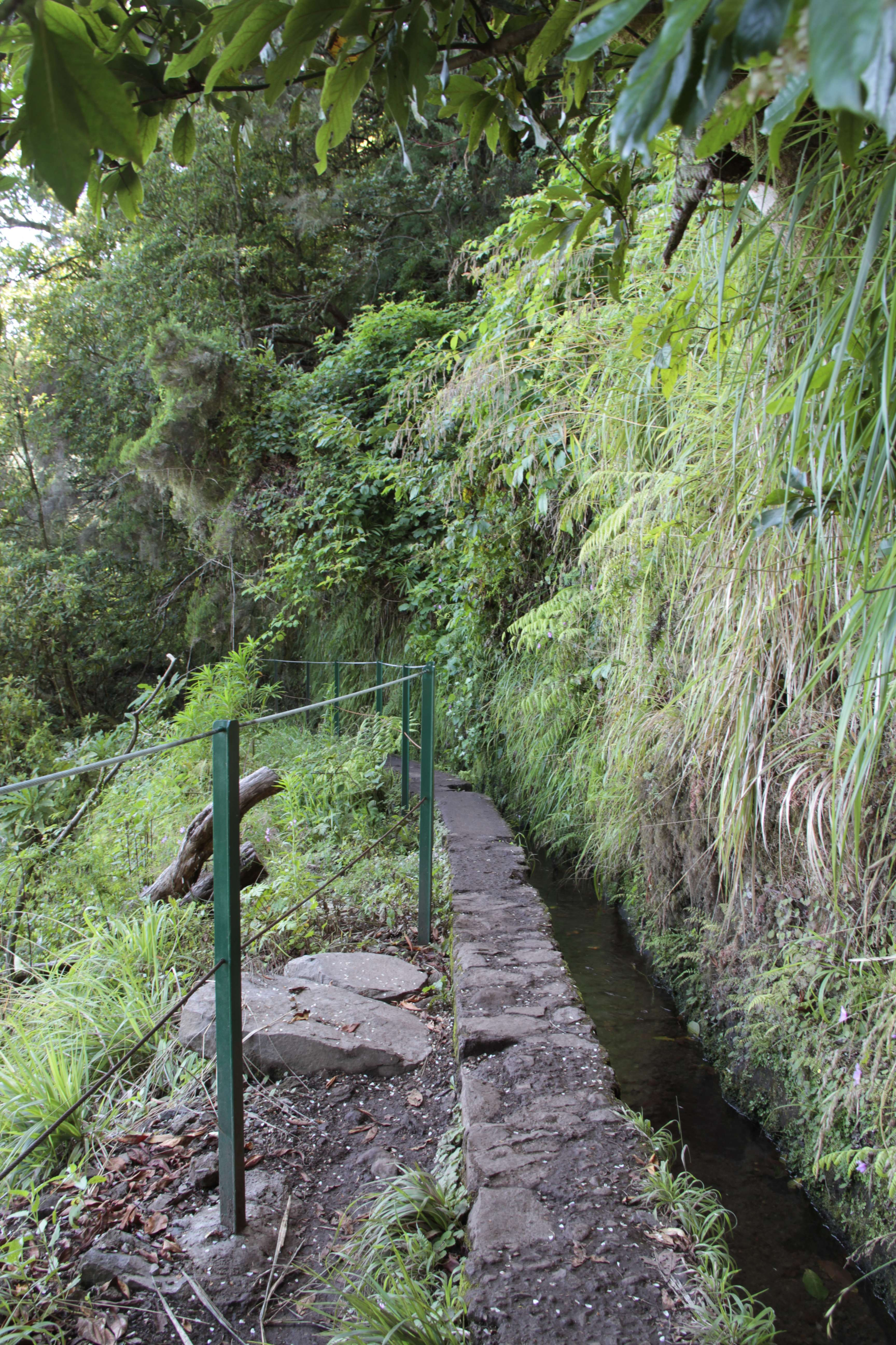 Madere aout 2019_0363 PR 9 Levada do Caldeirao verde