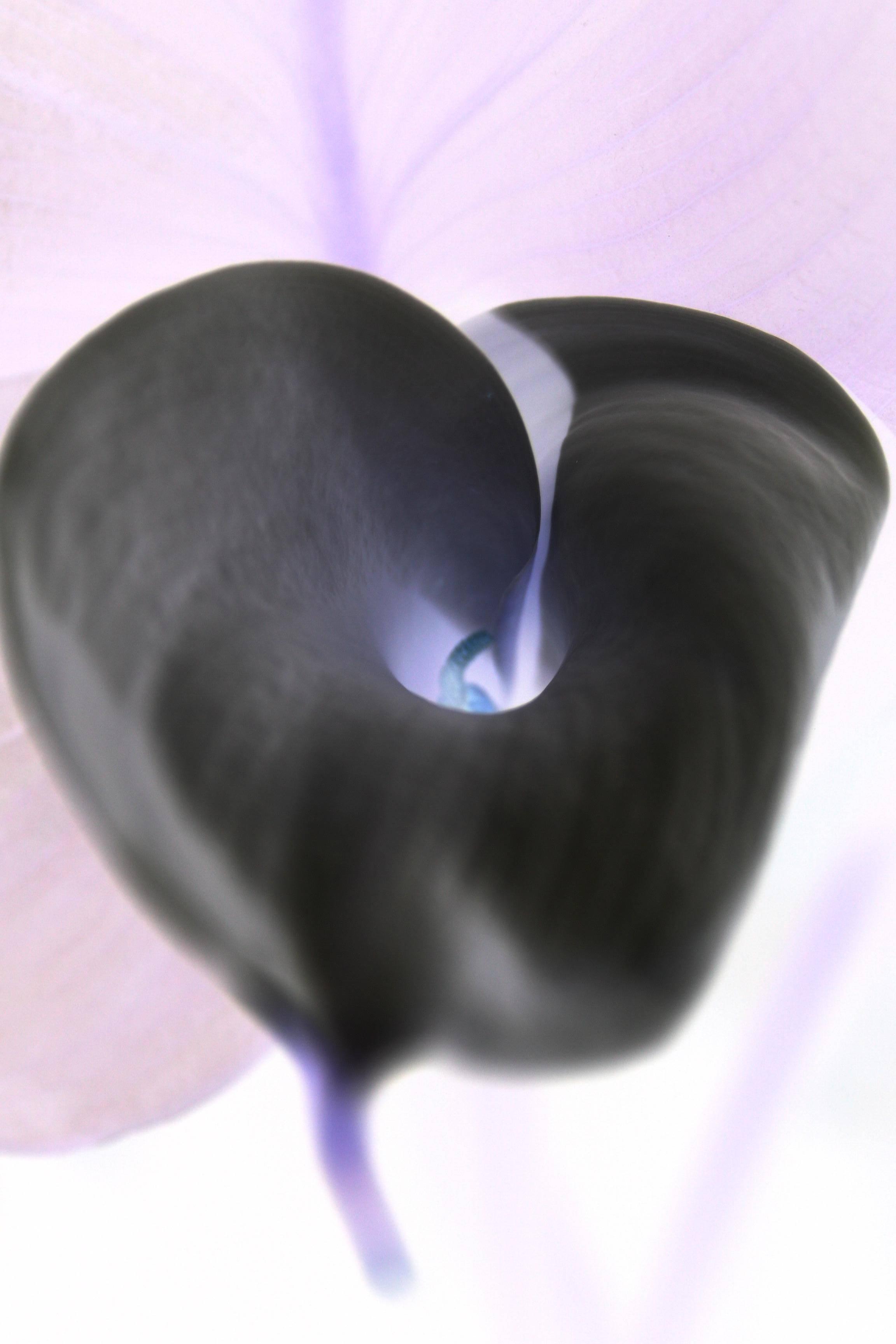 Arum02