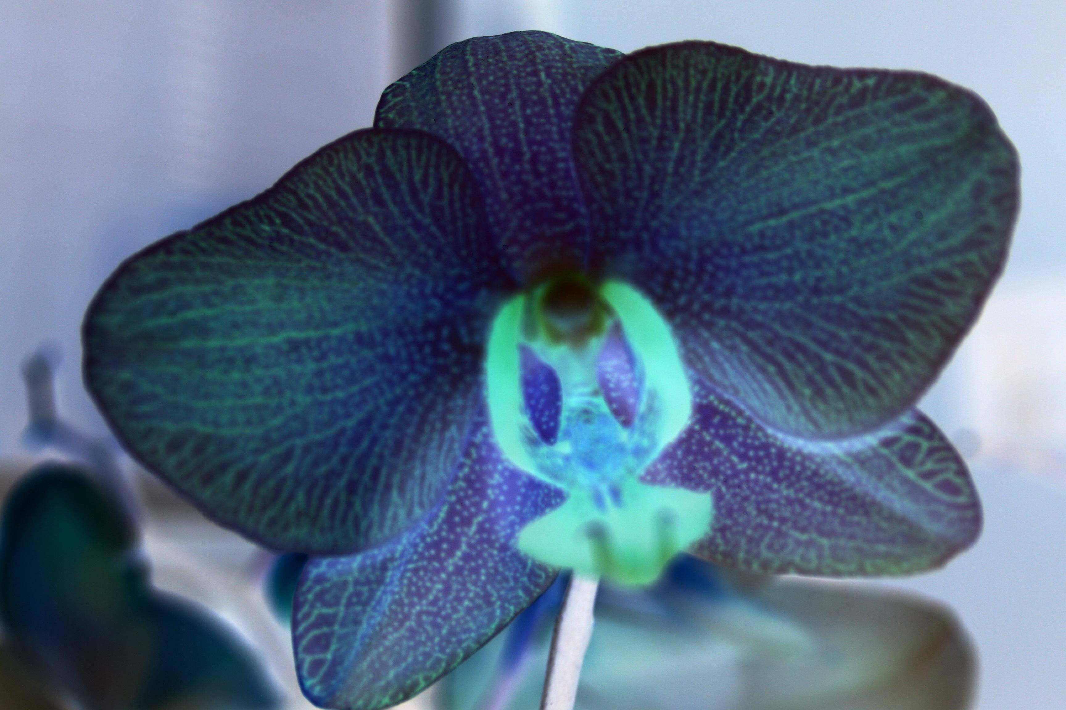 orchidee orange et violette