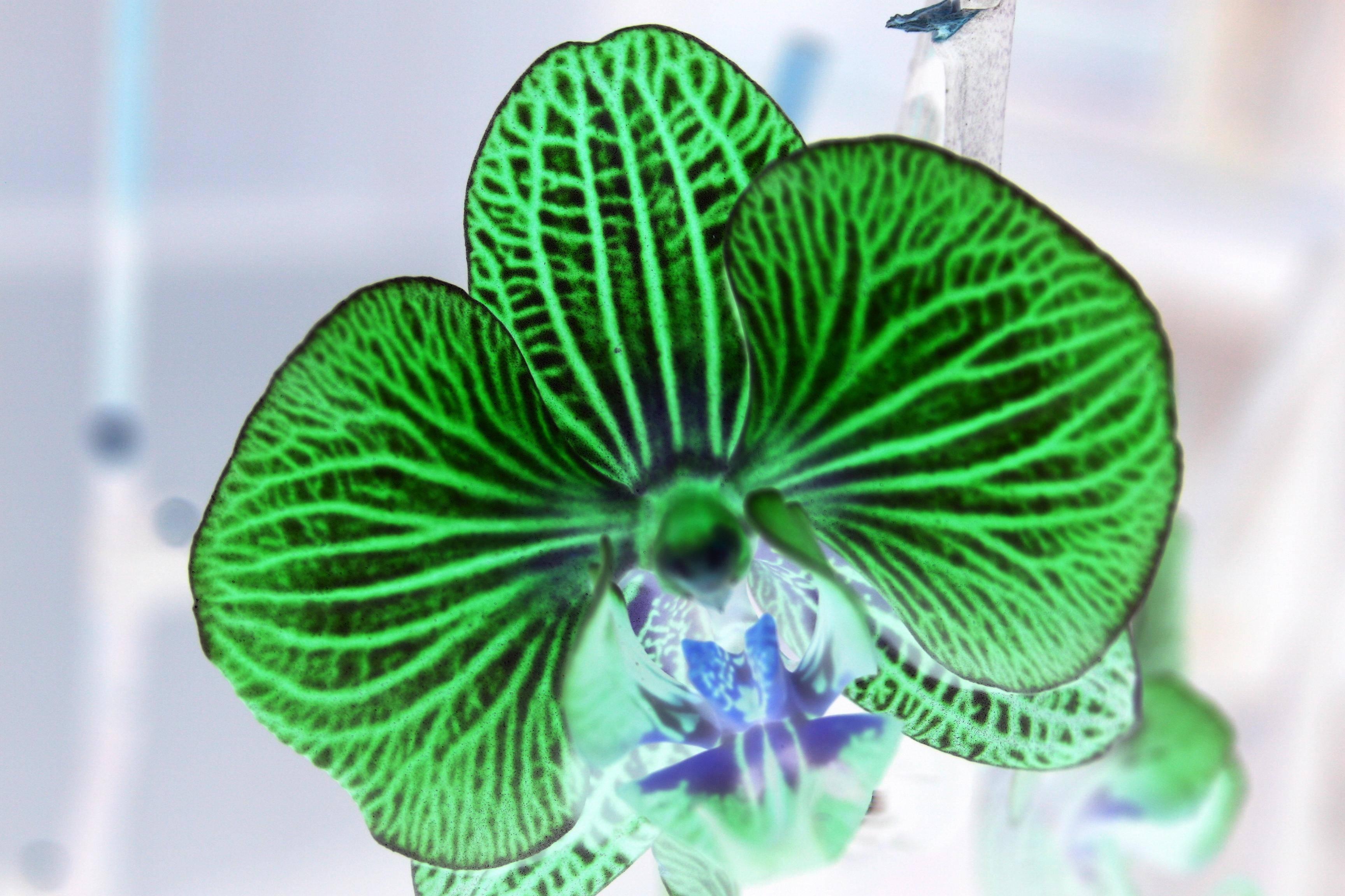 orchidee2 002