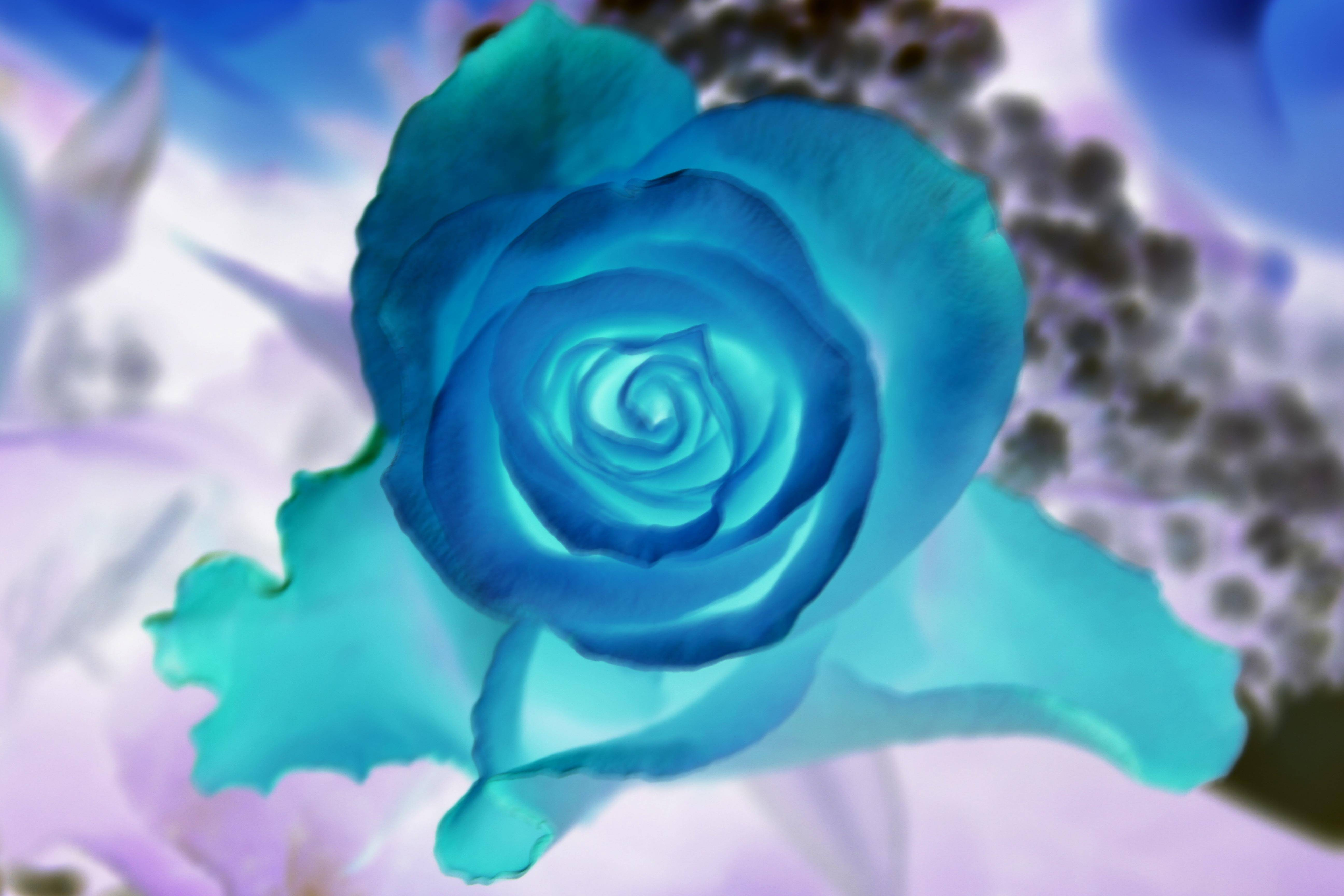 roses_0003