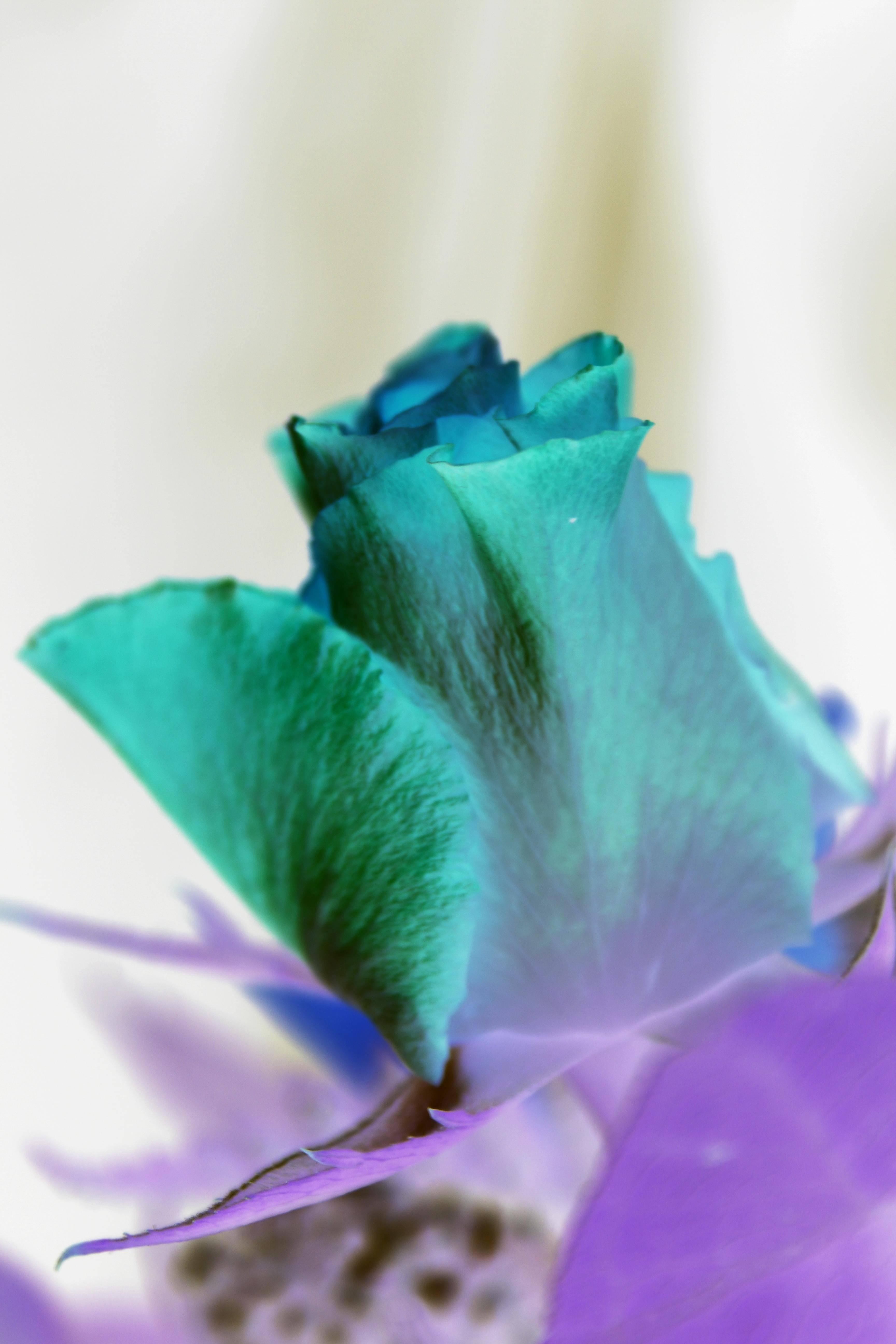 roses_0007
