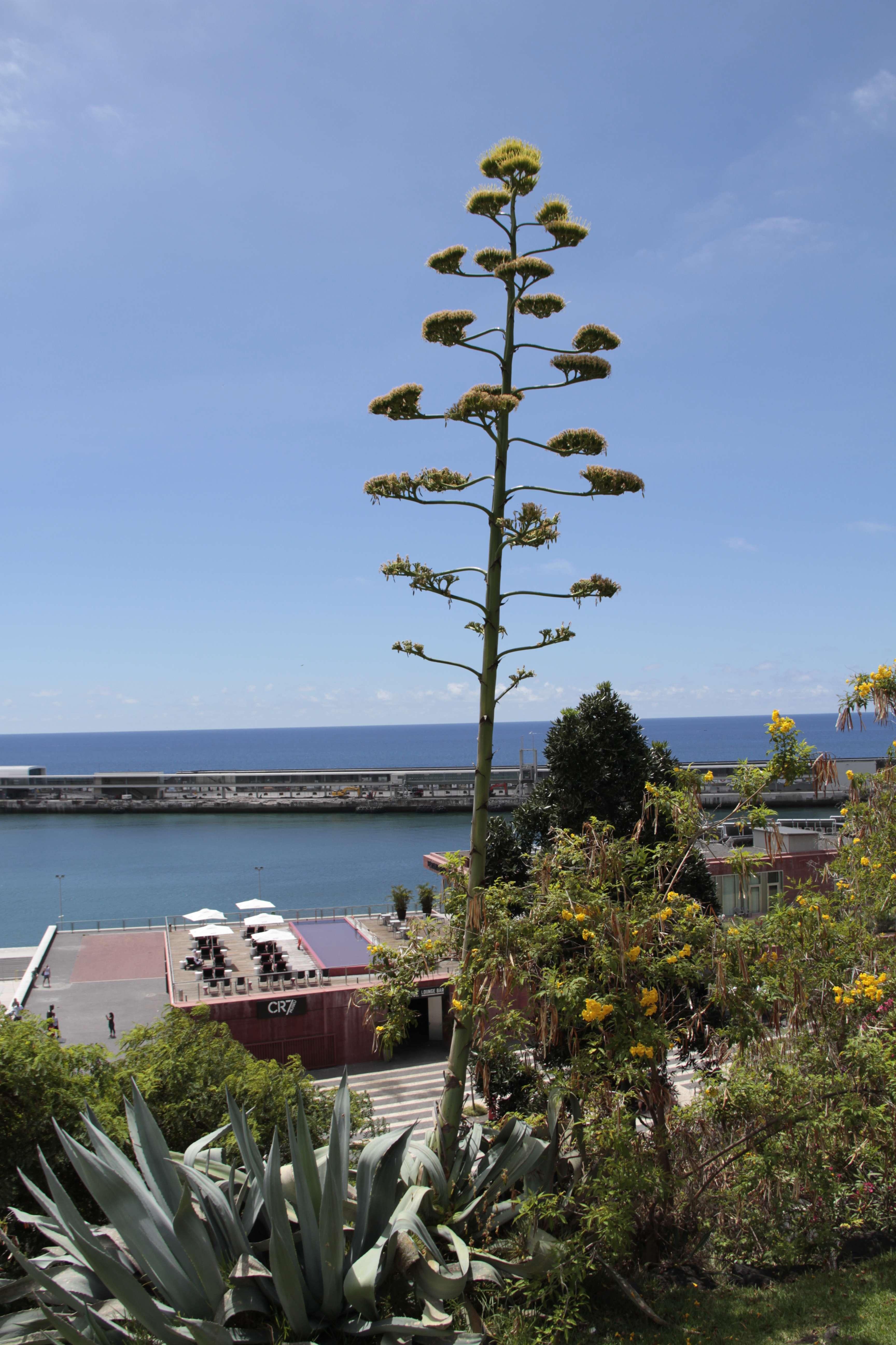 Madere aout 2019_0039 Funchal Parque de Santa Catarina