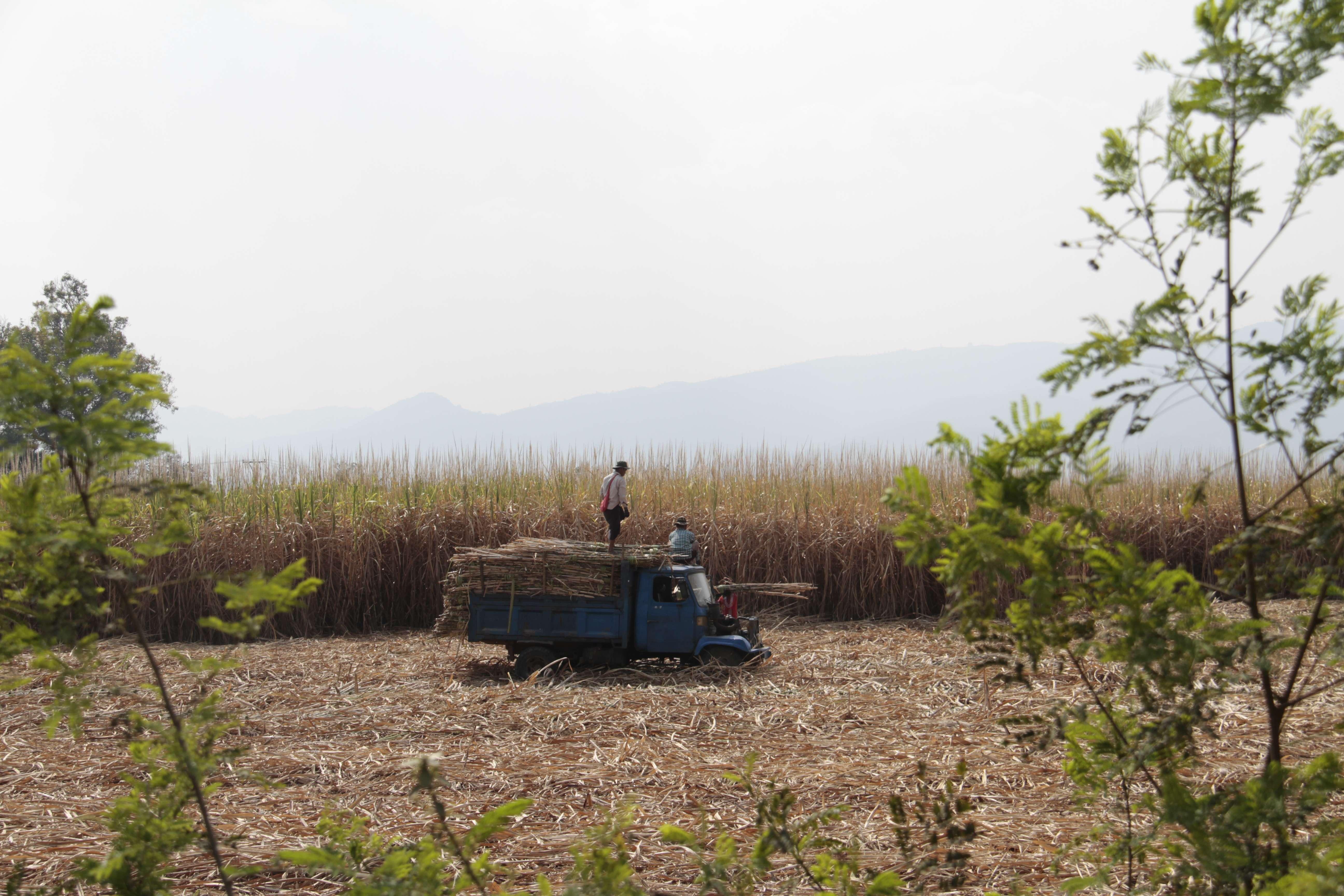 Myanmar fevrier 2019_0845 campagne autour du lac Inle