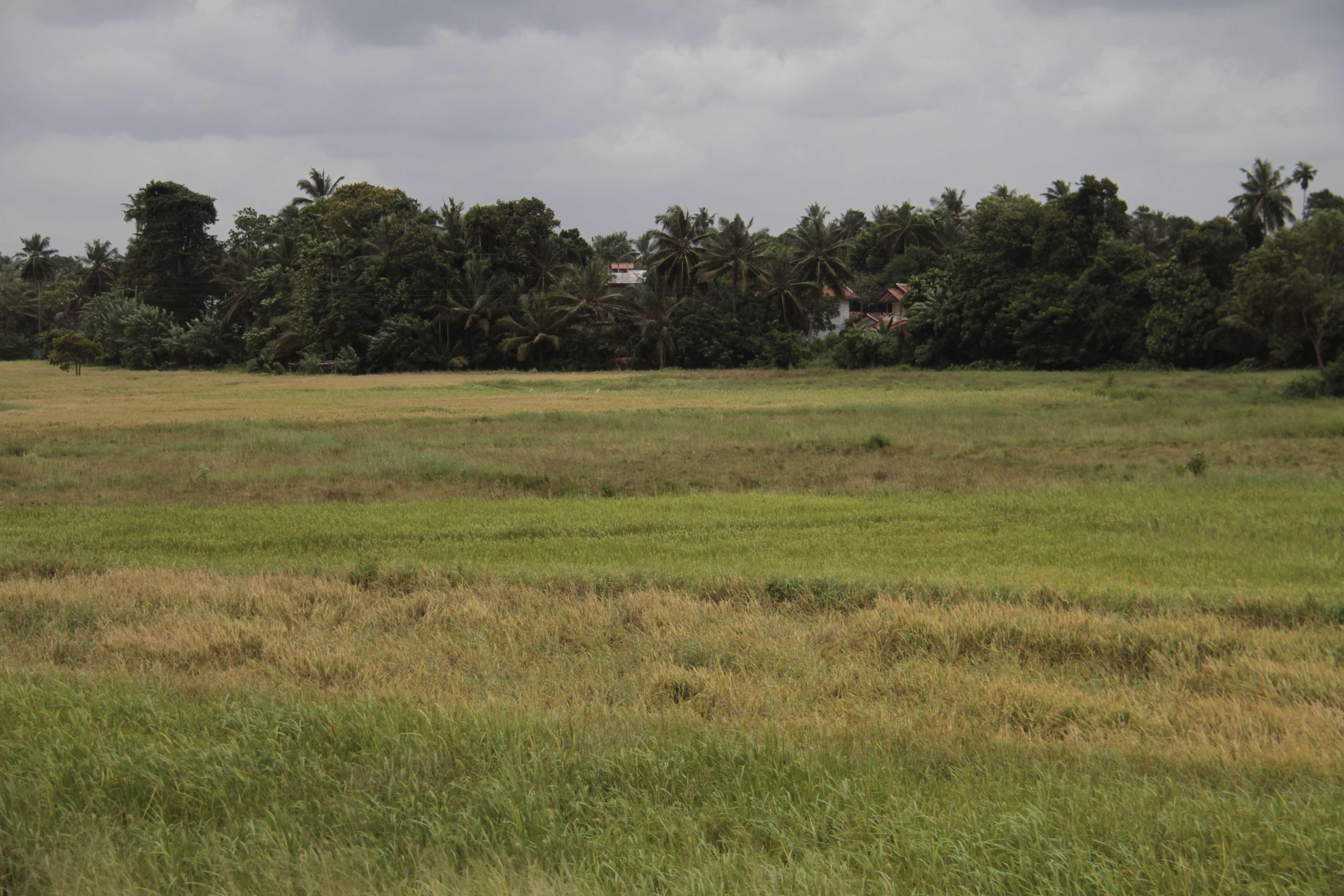 Sri Lanka aout 2017_0027 trajet Colombo Kandy