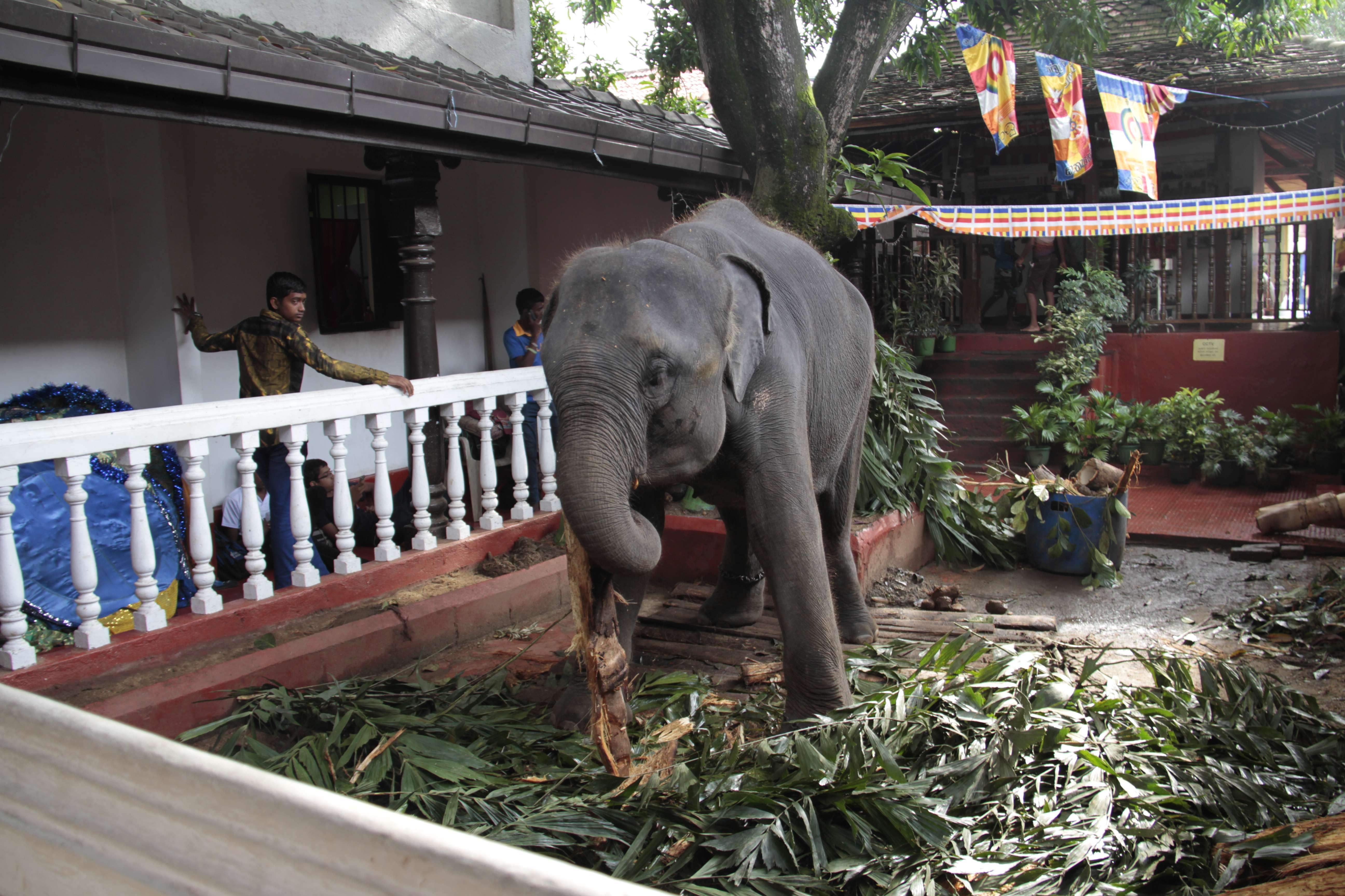 Sri Lanka aout 2017_0093 Kandy