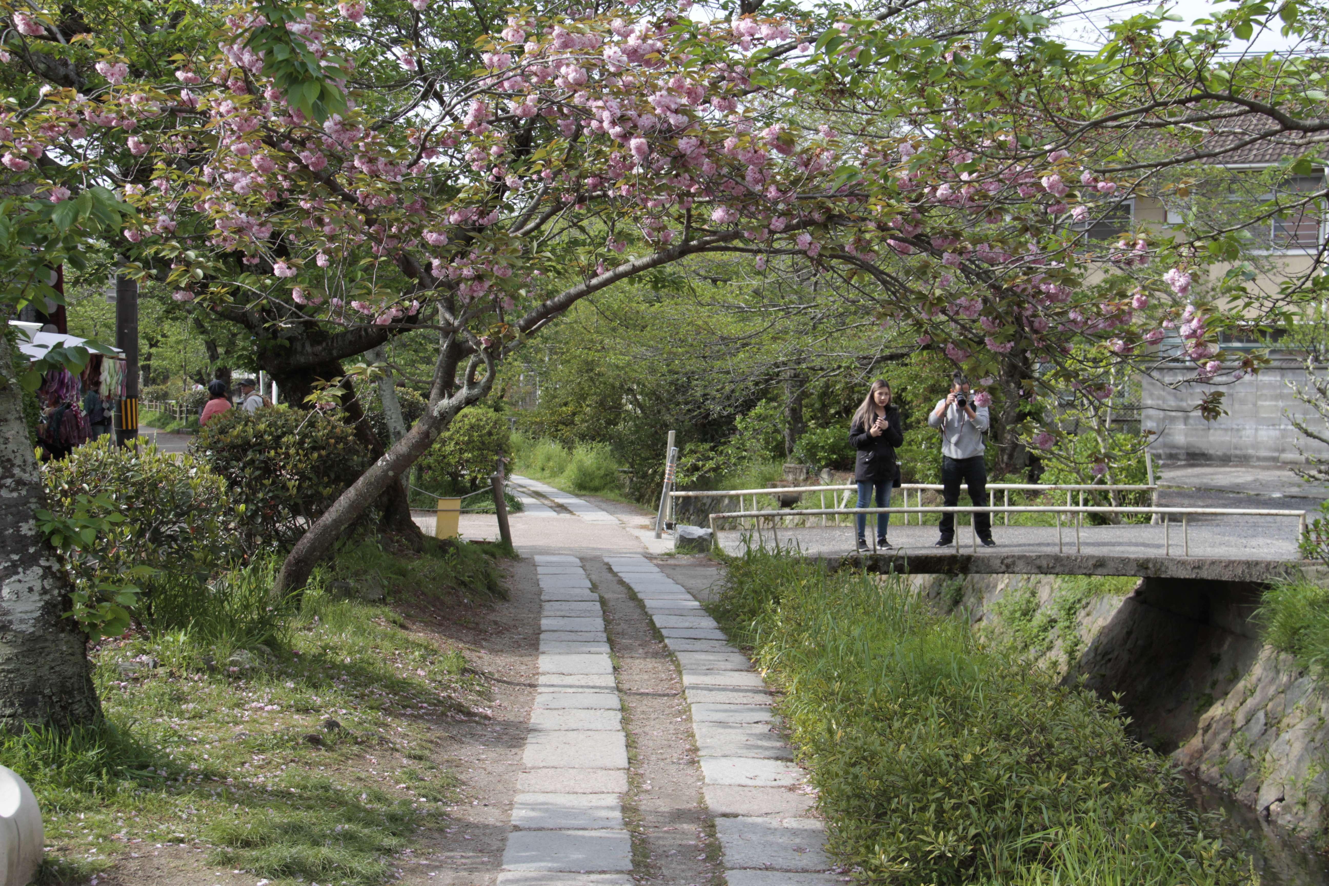 Japon avril 2017_0775 Kyoto chemin de la philosophie