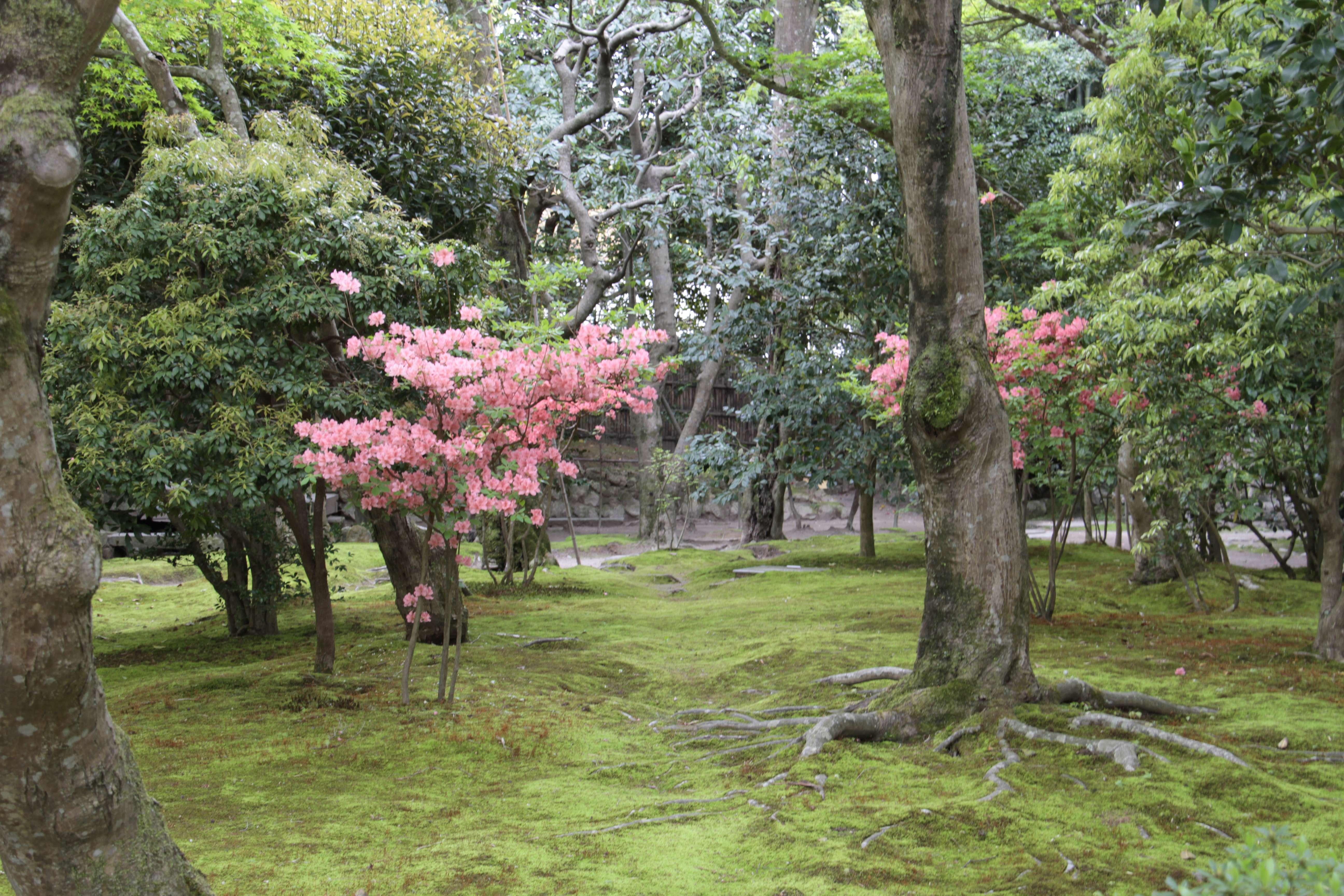 Japon avril 2017_0790 Kyoto Ginkaku Ji dit Pavillon d argent