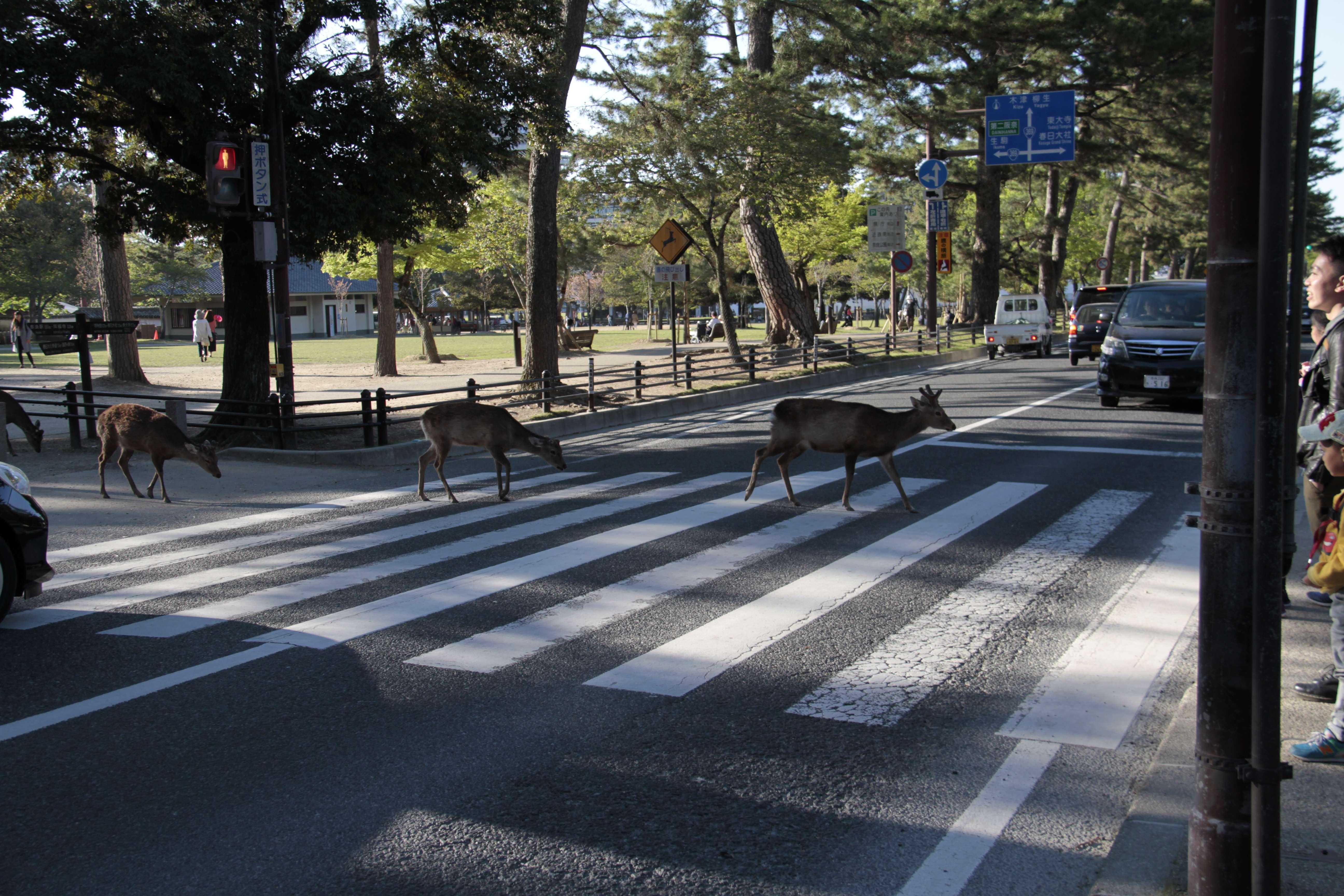 Japon avril 2017_0487 Nara parc Wakakusa
