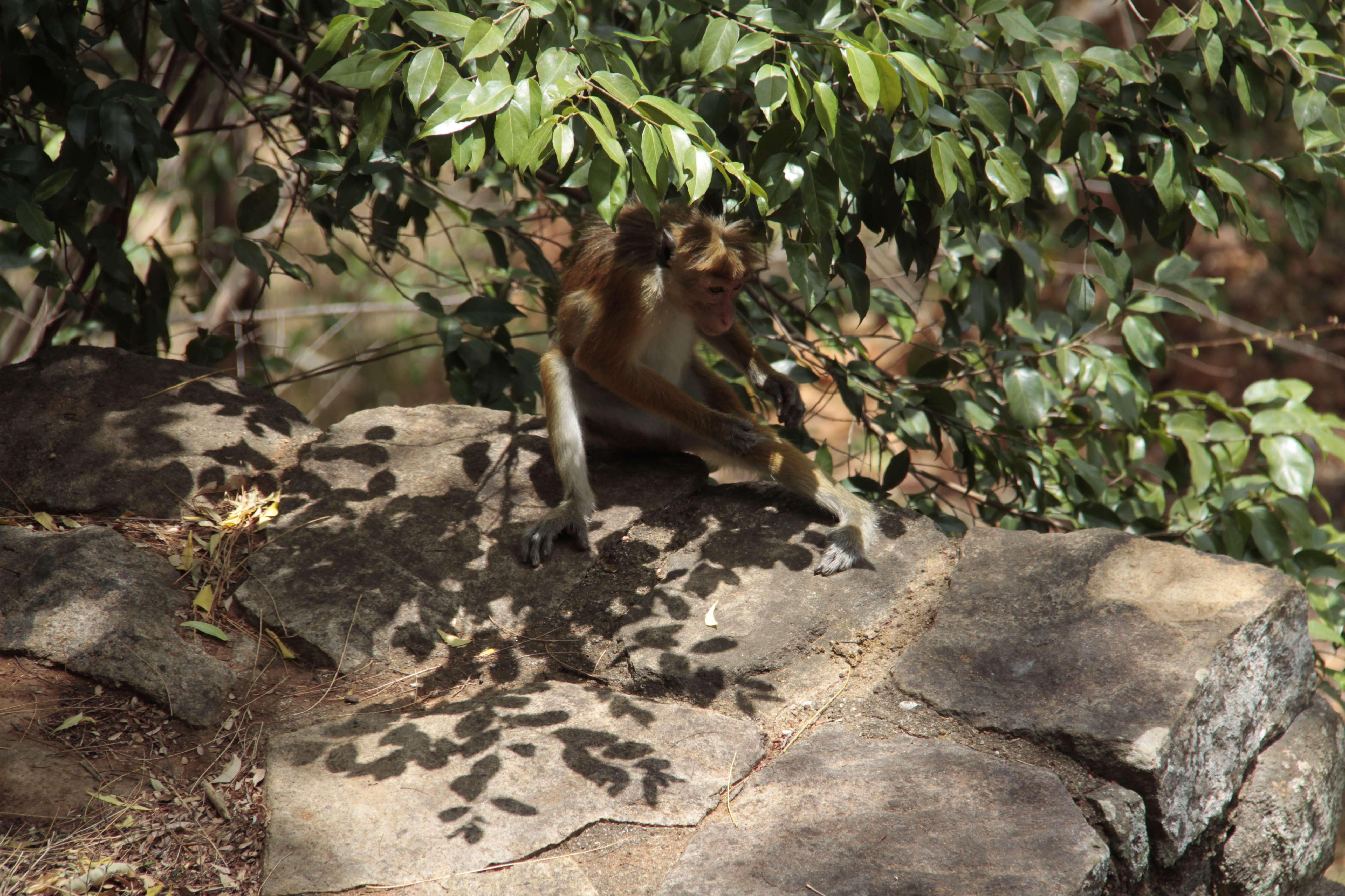 Sri Lanka aout 2017_0212 Sigiriya Lion s Rock