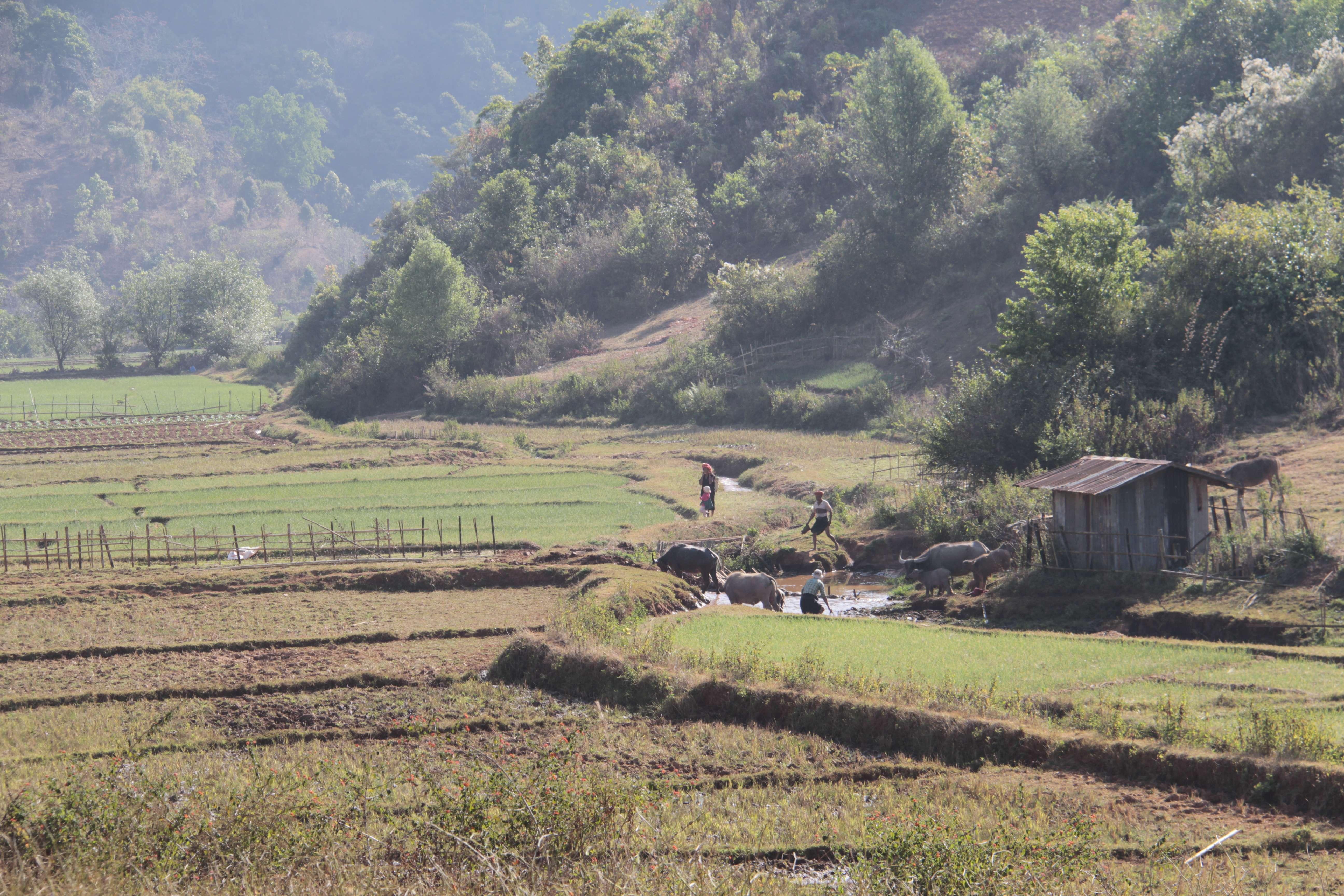 Myanmar fevrier 2019_0659 Trek Kalau Inle jour 2