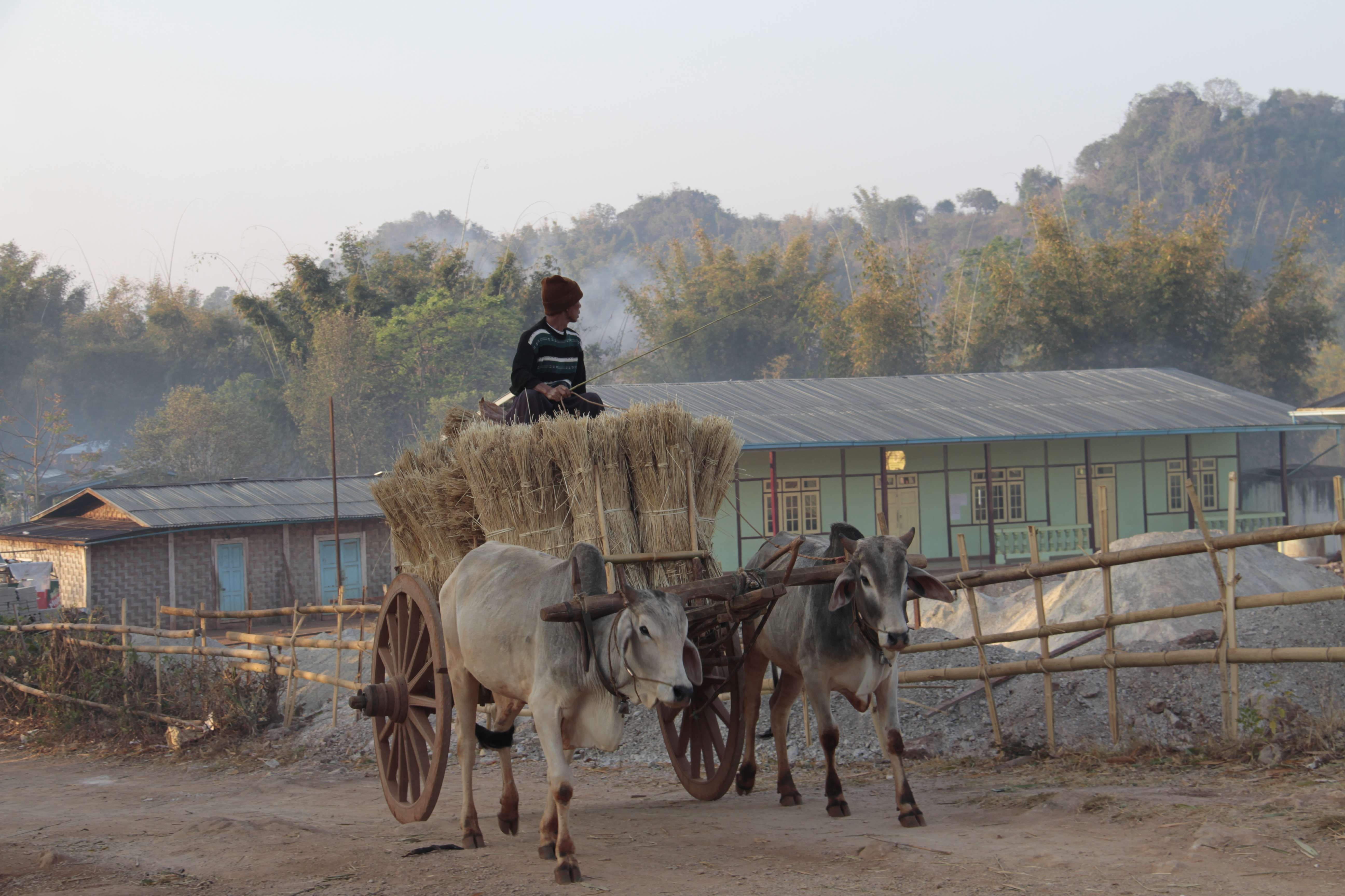 Myanmar fevrier 2019_0675 Trek Kalau Inle jour 3