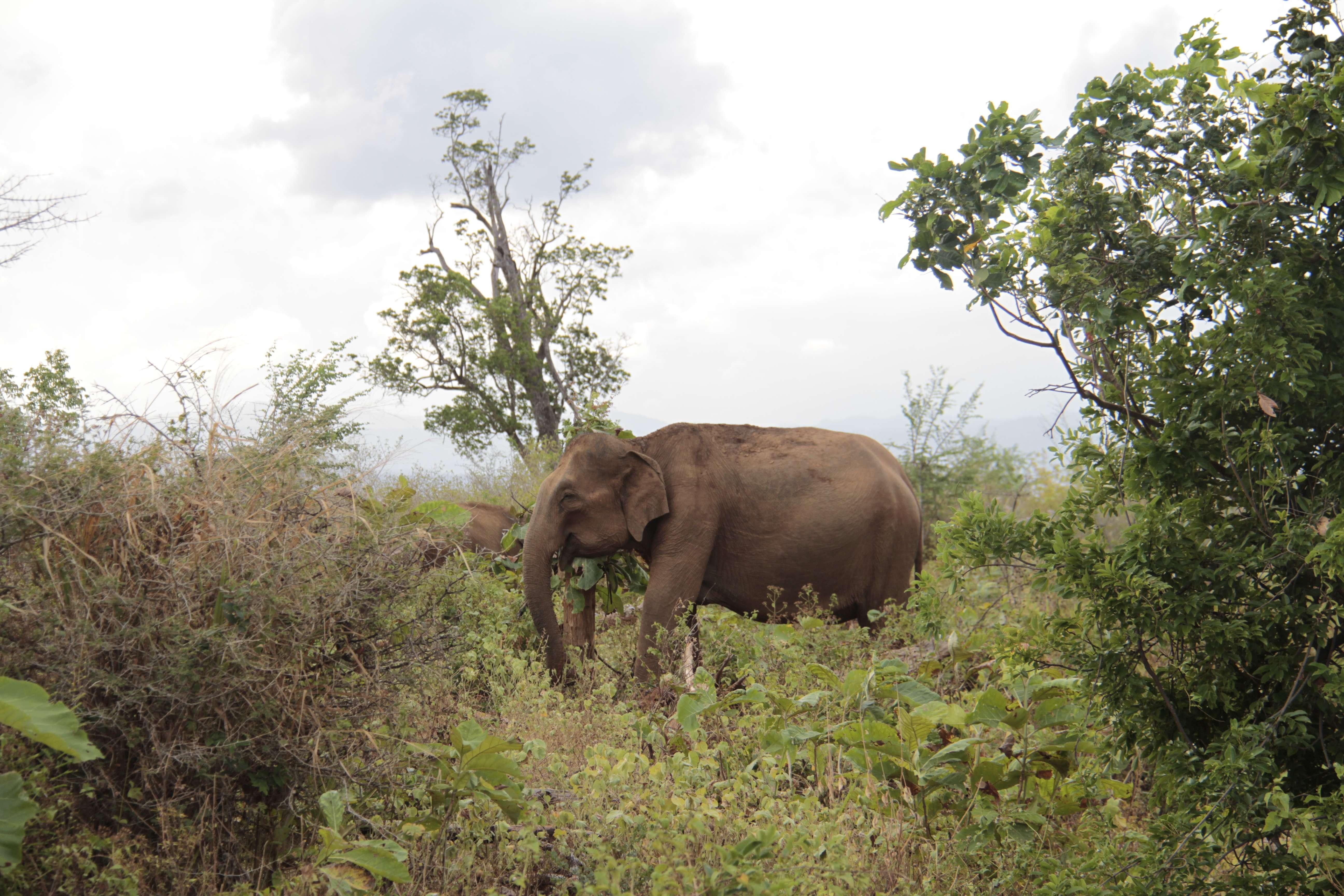 Sri Lanka aout 2017_0539 Uda Walawe